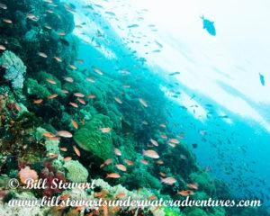 Verde Island, Philippines